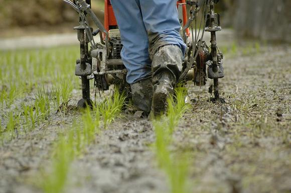 新規就農者を応援します!